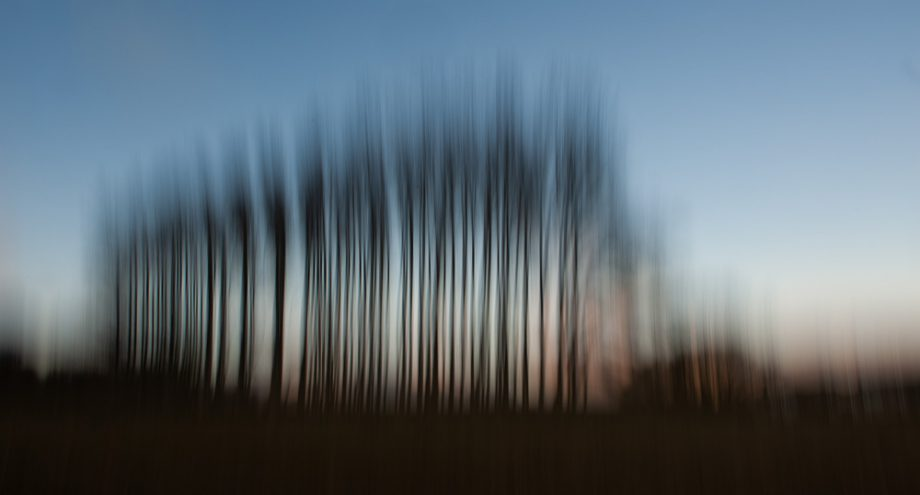 Beckoning trees